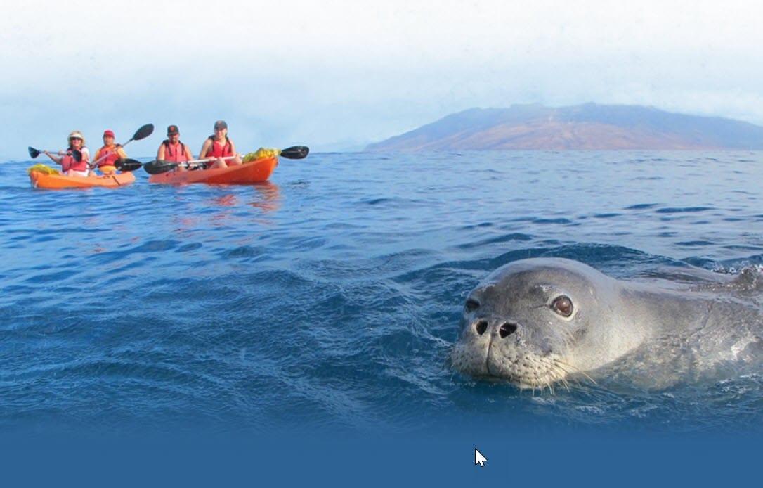 aloha maui kayak tours
