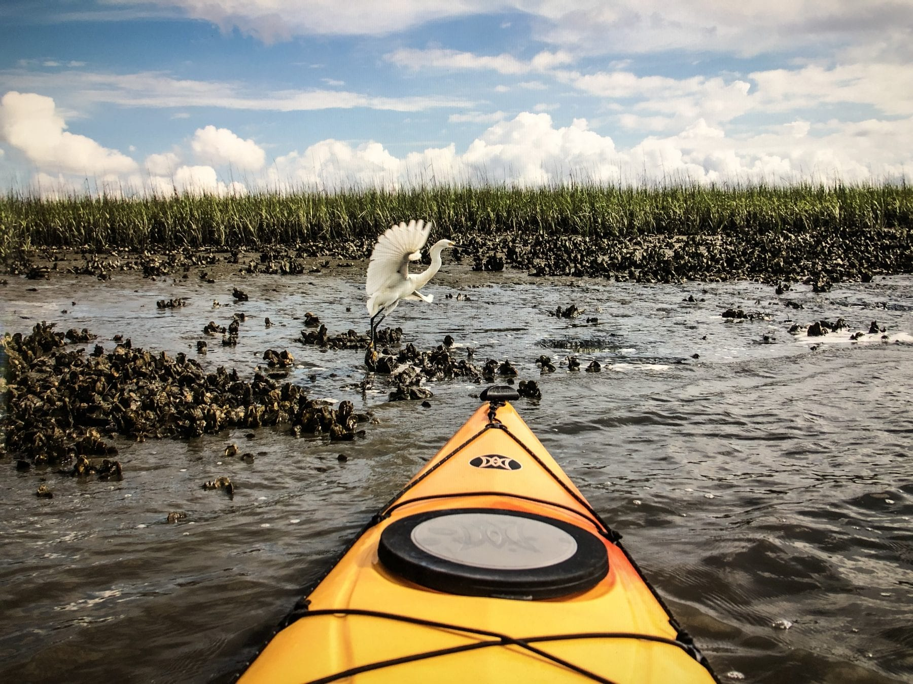 Flipper Finders Sea Kayak Tours