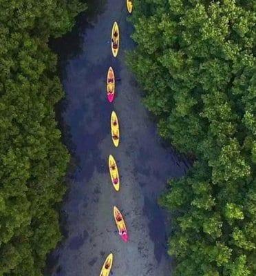 fajardo kayaking bio bay