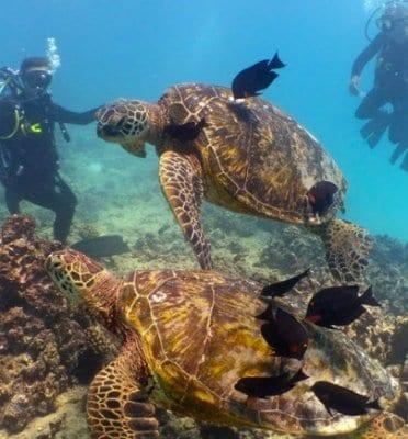 honolulu snorkeling and diving