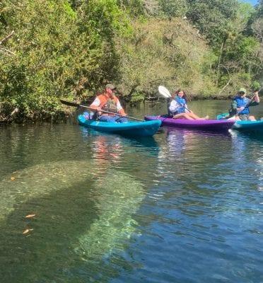 homosassa fl kayak tours