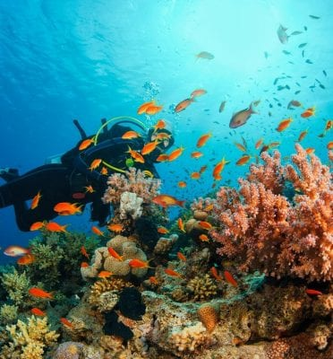 honolulu hi scuba diving
