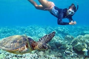 Hawaii Turtle Tours